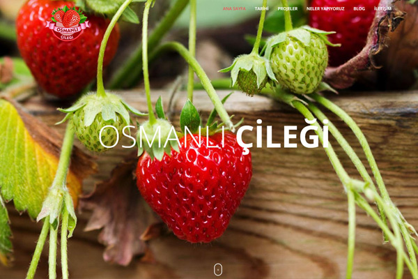 Osmanlı Çileği  Website